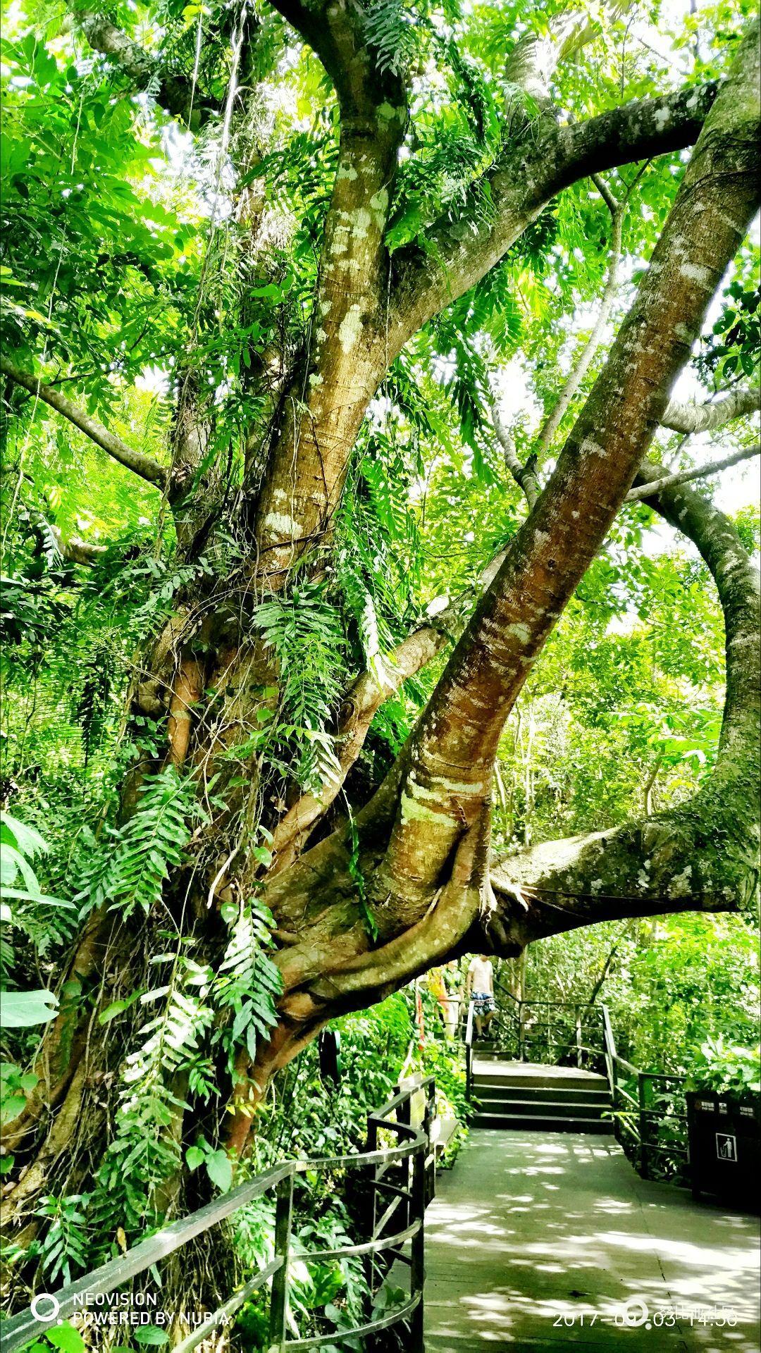 呀诺达热带雨林风景区