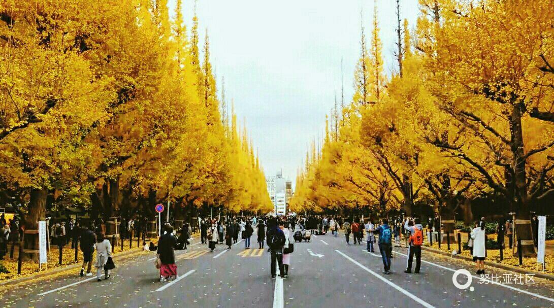 秋天的,日本街道风景线