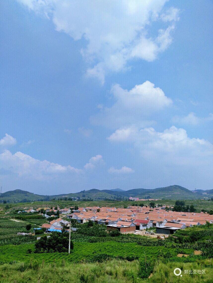 绿色的田野