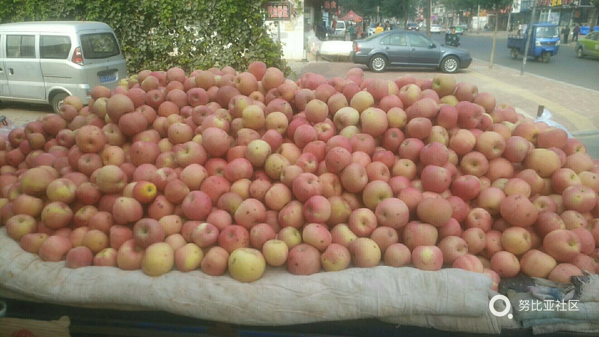 丰收的果实