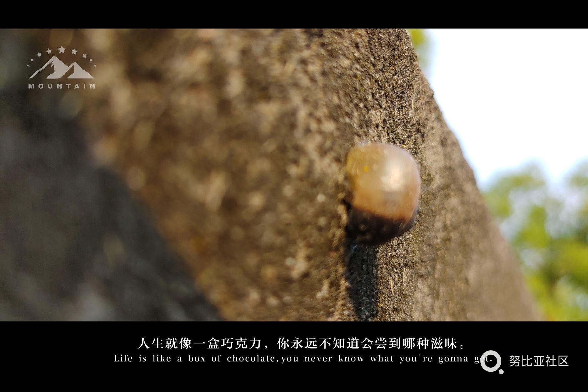 人生就是永远都不知道,惊喜和意外哪个先到来,我们永远都是攀爬的蜗牛,向往着阳光。