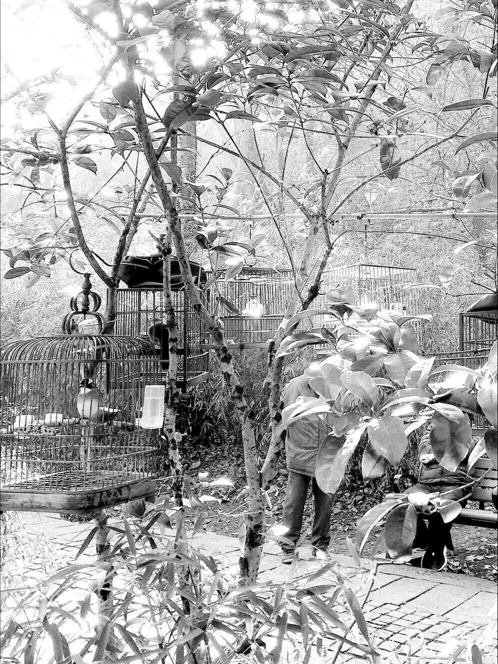 树上的鸟笼