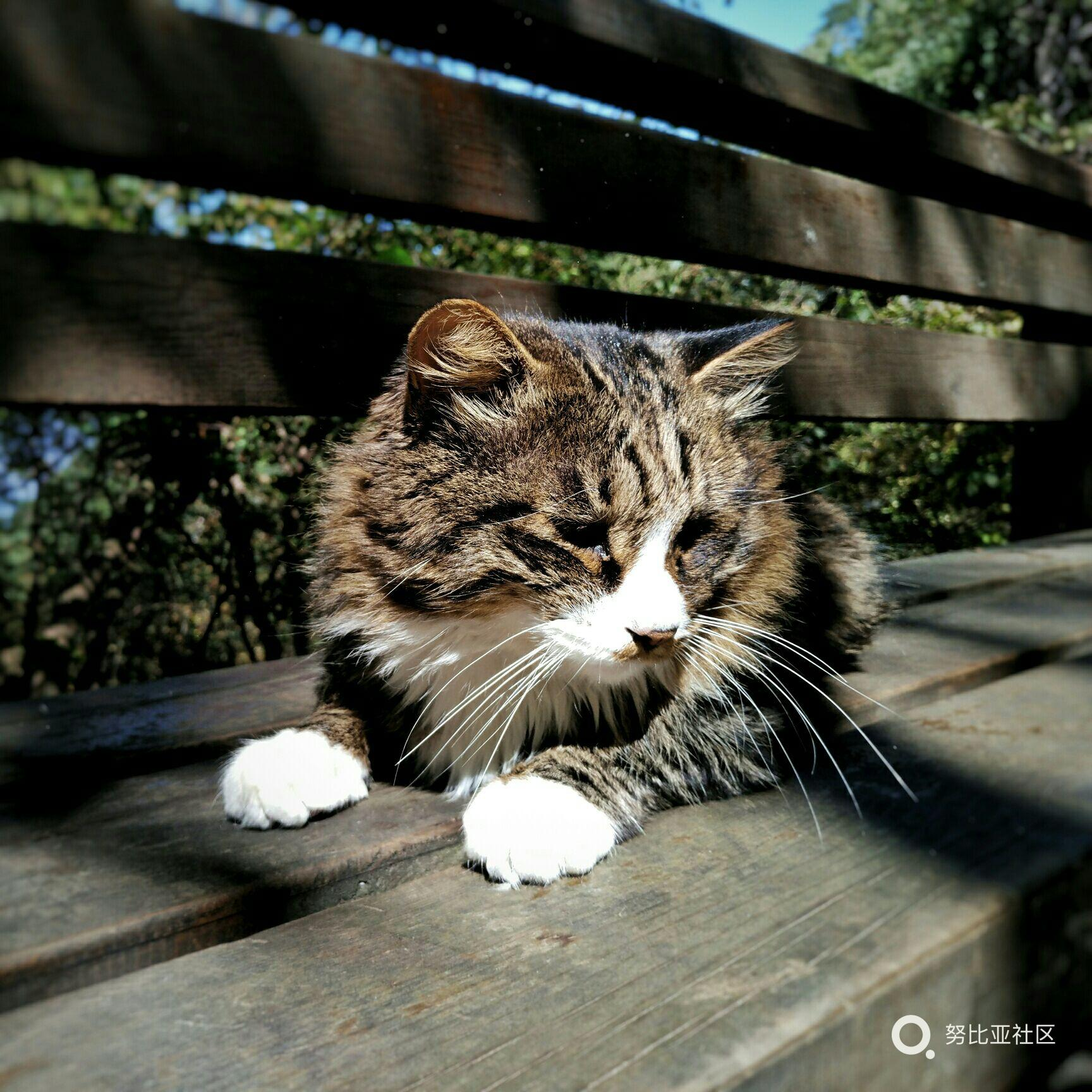 懒猫的日常,Z11