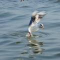 海边观鸟记