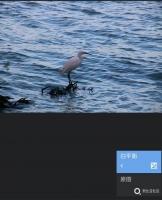 【手机摄影小课堂】snapseed蒙版入门