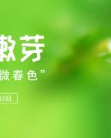 """【结果公布】春之嫩芽:你眼中的""""微春色"""""""