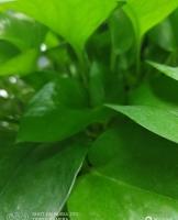 多看看绿色植物有利眼睛保护哦