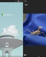黑白微距作品后期处理范例-Snapseed和Fotor综合运用