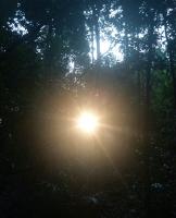 丛林的太阳