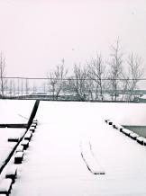 雪花依然在飘!  #生活